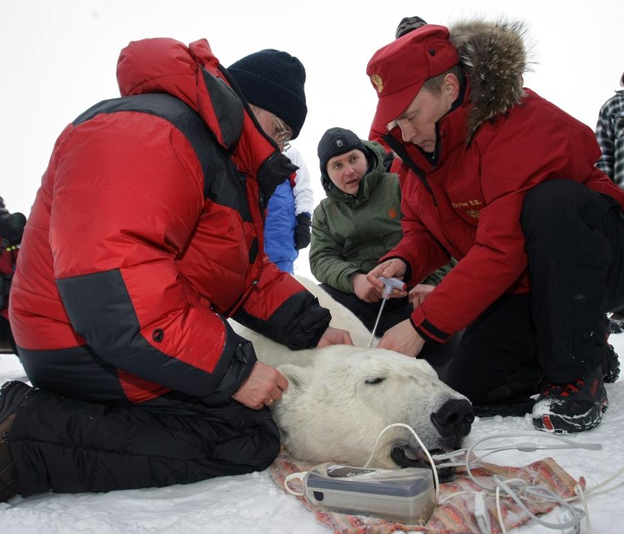 Putin e o Urso Polar