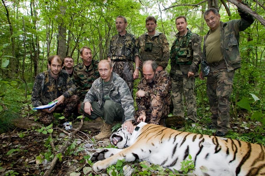 Putin e o Tigre