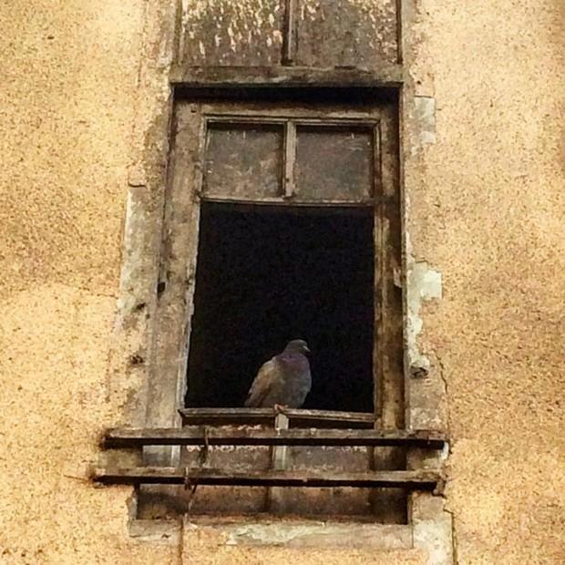 Pomba em uma janela, no Irã. Crédito @bahamorshedi